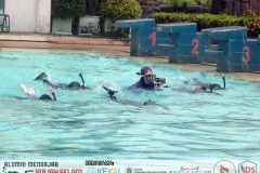 Water skill practise: fin swimming